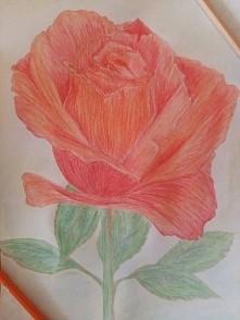 Nie urodziłam się z kredkami w ręce ;d ale próbować można ;) róża - 29.07.2015