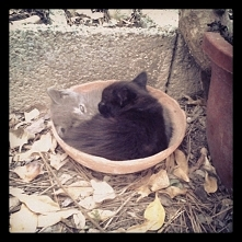 Kotki w podstawce na donicz...