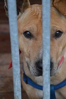 Moim drodzy :p Kompletnie z innej beczki :D Jestem miłośnikiem psów więc czas...