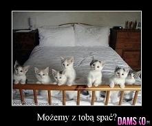 kociaczki ;**