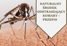 Komary potrafią skutecznie zepsuć każdy pobyt na łonie natury.  W bieżącym roku ich ilość i agresywność jest szczególnie dokuczliwa.  I tu jak zwykle pojawia się pytanie:  Czy s...