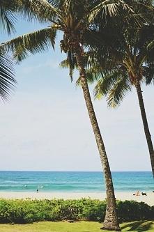 palmy i plaża to co uwielbiam najbardziej <3