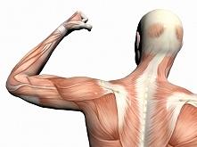 Takie mam malutkie pytanie: jak zwiększyć siłę mięśni? Staram się ćwiczyć, al...