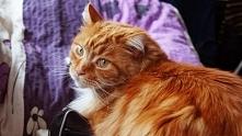 Dlaczego warto mieć kota? Odpowiedź na blogu.
