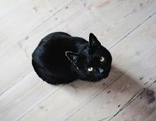 Dlaczego warto mieć kota? Odpowiedź na blogu