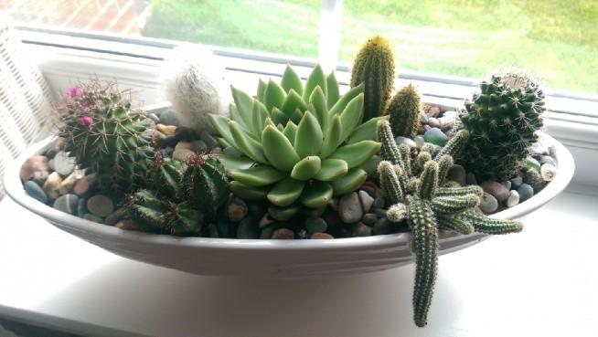 Moje Kaktusy Nareszcie W Doniczce Na Pomysły Zszywkapl