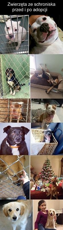 Zwierzęta ze schronisk przed i po adopcji.