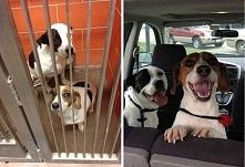 Jak wyglądają psy po adopcji? Zobacz 18 zdjęć udowadniających, że adopcja rat...