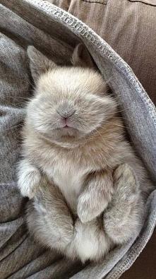 Szary króliczek