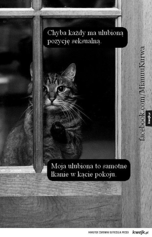 jaki kotek ;3