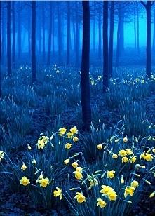 Black Forest, Niemcy