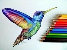 koloryy