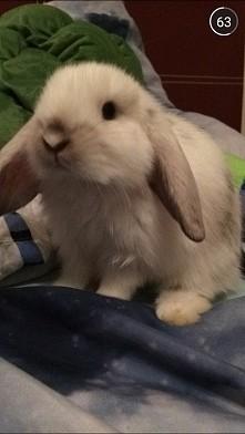 Hefalump - królik Jasia :)