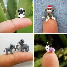 baranek małpka słoń i ślimak