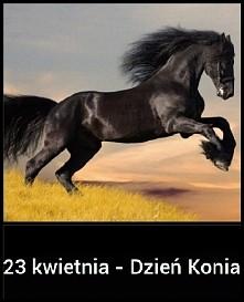 Kocham konie  *.*