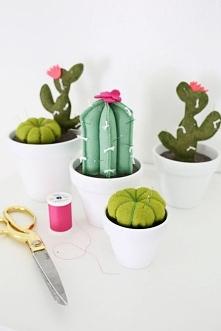 włochate kaktusy