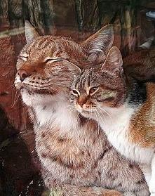 Bezdomny kot wkradł się do ZOO i… znalazł tam najlepszego przyjaciela!
