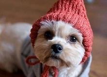 Przygotowania do zimy ;)