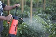 Opryskiwacze ogrodowe – jaki wybrać?