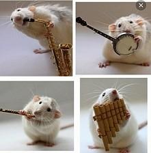 Szczurek :3