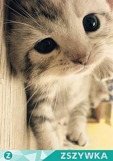 Kotełek
