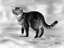 Kot. Rysowany na postawie z...