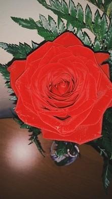 Żadna inna róża mnie tak ...