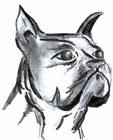 Szkic psiaka