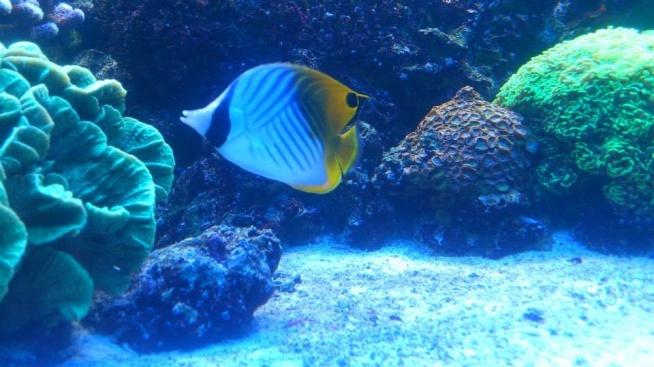 Przepiękne akwarium, tak kolorowe. Fotografia z kategorii natura.
