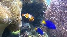 Gdzie jest Nemo? :) Przepię...