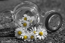 Daisies In Glass