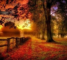 to się nazywa prawdziwa jesień :)