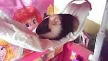Świniak mojej kuzynki :)