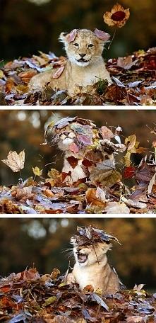 Zwierzęta też kochają jesień! WIĘCEJ PO KLIKNIĘCIU W OBRAZEK.