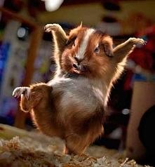 Karate świnka