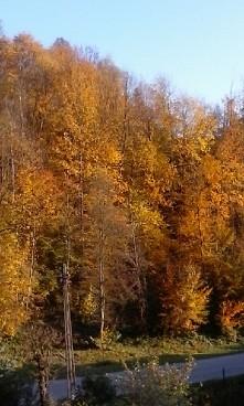 taką jesień kocham
