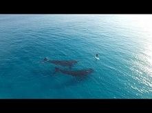 pływanie razem z wielorybami. takie rzeczy tylko w Australii