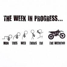 The week in progress