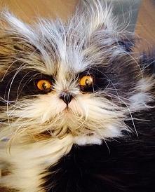 Zobacz kota, który wygląda jakby miał ochotę pożreć twoją duszę! WIĘCEJ PO KL...