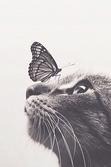 butterfly&cat