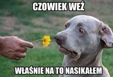 dobre  ha ha ha