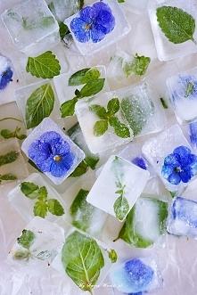 Ziołowe kostki lodu <3