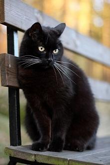 Czarne koty szukają czarownic! Więcej na Zoomia