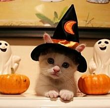 Kociak też ma przebranie na zbliżające się Halloween;)