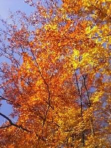 górska jesień jest piękna ♡ wycieczka na Magurke