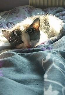 Mój prywatny koteł ^^