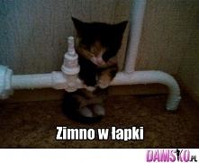 zimnoo <3