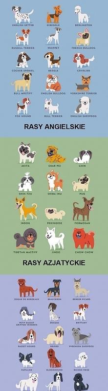 Rasy psów z różnych krajów ;-)