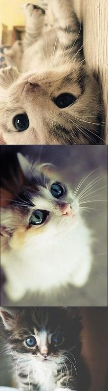 Słodkie kociaki :*