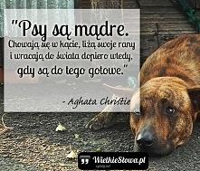 """""""Psy są mądre. Chowają się w kącie, liżą swoje rany i wracają do świata dopie..."""